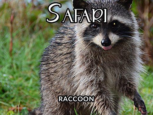 (Racoon)