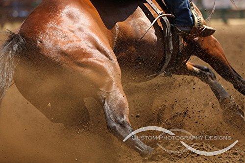 Barrel Racing Horse. Fine art collectibles photograph print. By Robbin Siembieda