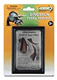 CollectA Prehistoric Life Tooth & Foot Claw of Velociraptor in Display Case - Paleontologist Approved Dinosaur Fossil Replica