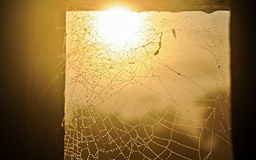 Mount Spider Frame - Home Comforts Acrylic Face Mounted Prints Wet Sunlight Back Light Spider Webs Droplets Frame Print 20 x 16. Worry Free Wall Installation - Shadow Mount is Included.