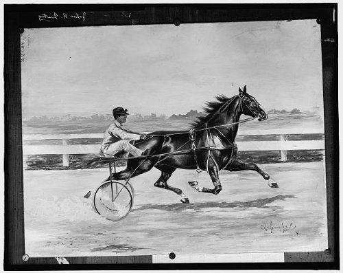 Photo: John R Gentry,harness racing,horses,carts,Detroit Publishing Company,c1900 -
