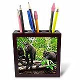 3dRose Danita Delimont - Primates - Indonesia, Sulawesi. Crested black macaque troop at rest in rainforest - 5 inch tile pen holder (ph_257192_1)