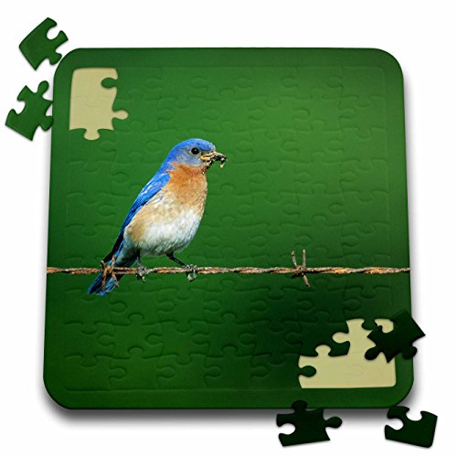 danita-delimont-bluebird-eastern-bluebird-male-on-barbed-wire-fence-with-food-illinois-10x10-inch-pu