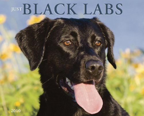 - Just Black Labs 2010 Calendar