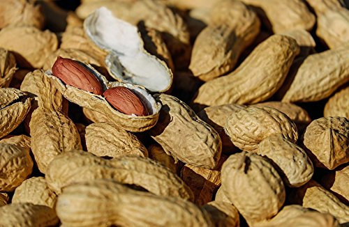 Home Roasted Nuts - Home Comforts LAMINATED POSTER Cores Roasted Peanut Nuts Healthy Snack Delicious Poster 24x16 Adhesive Decal