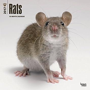 Calendario 2017 ratas - nacs - nuevos animales de compañía + ...
