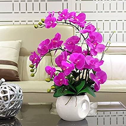 Amazon.com: Nearly Natural Phalaenopsis Silk Orchid Flower ...