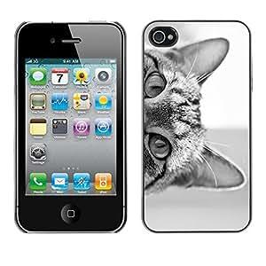 Design Hard ShellBlack White Kitten Cute Pet For HTC One M9 Case Cover