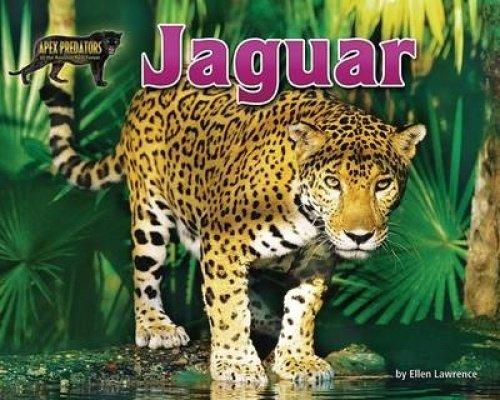 Jaguar  Apex Predators Of The Amazon Rain Forest