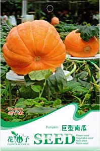 Pumpkin Seed 5 Giant Pumpkin Vegetable Heirloom Organic Green Nutritious Food B032 By Mikedaoer