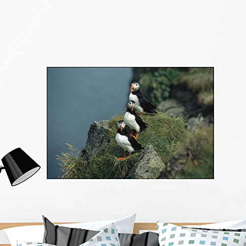 Trio Atlantic Puffins Perch Wall Mural by Wallmonkeys Peel and Stick Graphic (36 in W x 24 in H) WM321838 (Atlantic Puffins Perch)