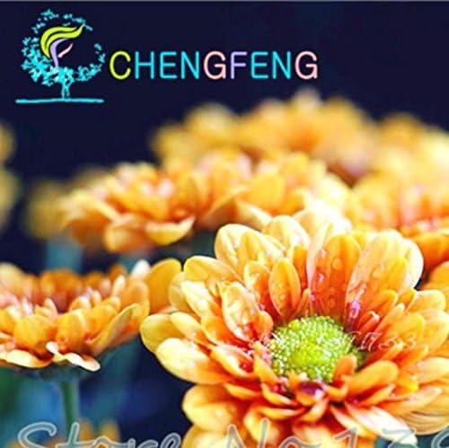 50 color de la mezcla de la margarita Hardy plantas Semillas crisantemo flor exótica Flores ornamentales para la decoración casera y jardín: Amazon.es: Jardín