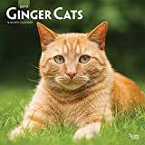 Ginger Cats 2019 12 x 12 Inch Monthly Square Wall Calendar, Animals Cats Ginger (Multilingual Edition)