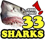 The 33 Amazing Sharks (33 Animals   Animal Fact Books for Kids Book 8) (English Edition)