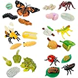 Insect Lore Life Cycle Stages Complete Set Insect Figurines
