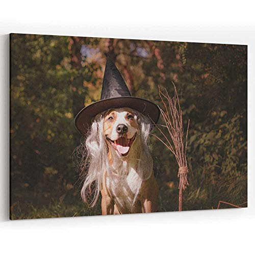 Beautiful Dog with Broomstick Dressed up for Halloween