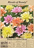 Blends of Beauty Dahlia Perception Blend - 4 Bulb Clumps