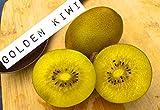 Fresh Golden Kiwi Fruit Kiwifruit (2 Pounds)