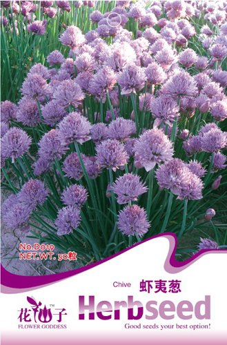 Ezo Onions Seed 50 Rare Herb Seeds Lovely Purple Natural Vegetables HOT D019 By Mikedaoer