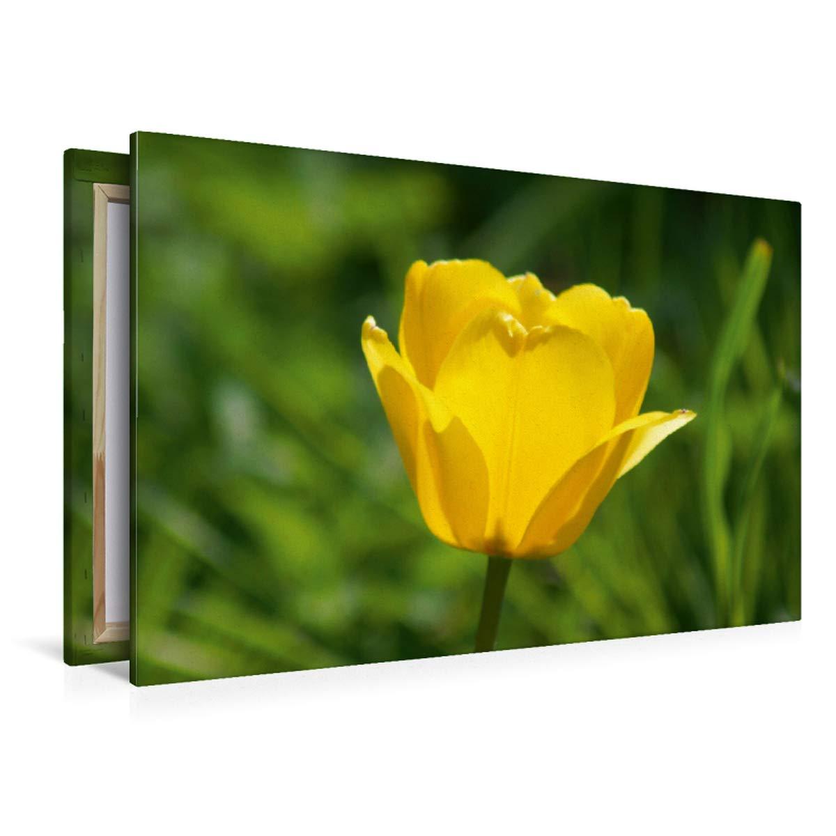 Premium Textil-Leinwand 120 cm x 80 cm quer Gelbe Tulpenblüte Tulpenblüte Gelbe a74c1b