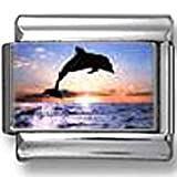 Dolphin Jumping Photo Italian Charm