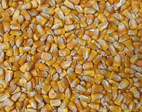Organic Yellow Whole Corn by Freshly Milled Breads | Corn Maize USDA Certified Organic Non-GMO Bulk Grains 5 lbs Great for Tamale Masa Tortillas Muffins Chowder 100% Product of USA