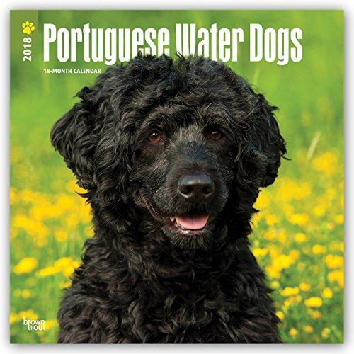 portuguese water dog calendar - 1