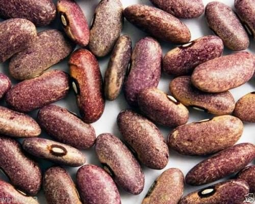 Provence Beans, Organic,originated in Africa, beautiful purple color.100 Seeds ! (Bowl Soup Provence)