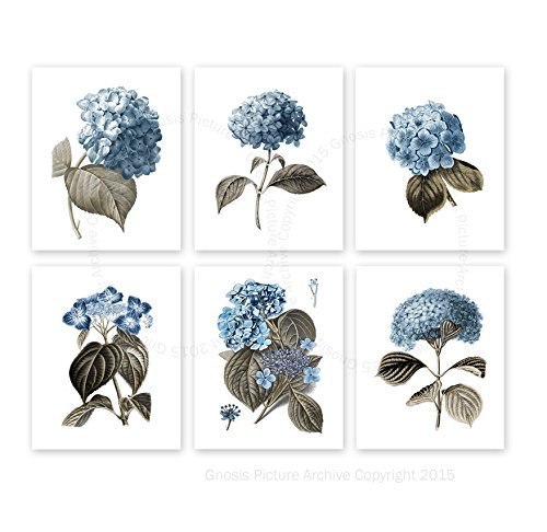 Blue Flowers Botanical Prints Hydrangea Art Prints Set of 6 Unframed Blue Flowers Wall Art Farmhouse Decor Blue_Hydrangea6A