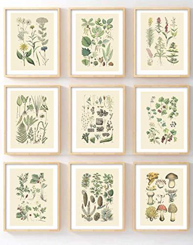 (Ink Inc Botanical Prints Woodland Plants Set of 9 5x7 Home Decor Wall Art Wildflower Mushrooms Fern Trees Berries)