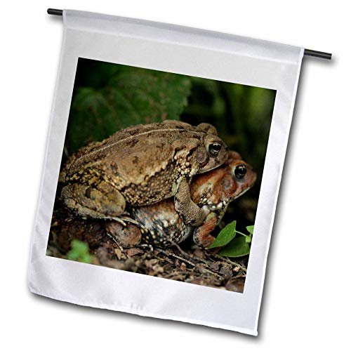 3dRose Stamp City - Amphibian - Macro Photograph ot Two Toads Hugging. Toadally in Love. - 18 x 27 inch Garden Flag (fl_316767_2)
