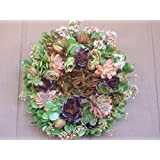 """15"""" Sphagnum Moss Living Wreath Round, Natural-organic Original Plus Package of 50 Topiary Pins"""