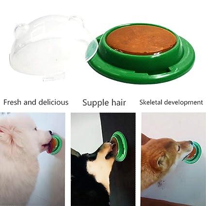 El gato del perro mascota trata la bola de azúcar, UMIWE lame el caramelo del