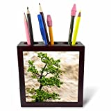 Danita Delimont - Tree - Tree and river in flood, Banff, Alberta, Canada - 5 inch tile pen holder (ph_226683_1)