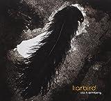 Liarbird by Ola Kvernberg (2012-02-07)