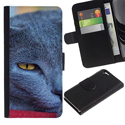 LASTONE PHONE CASE / Luxe Cuir Portefeuille Housse Fente pour Carte Coque Flip Étui de Protection pour Apple Iphone 5 / 5S / Siberian Blue British Shorthair Korat