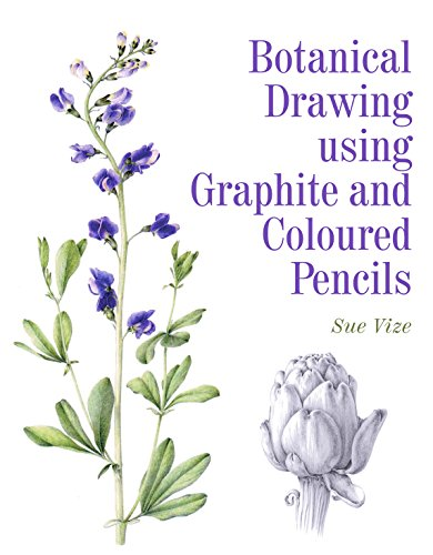 botanical-drawing-using-graphite-and-coloured-pencils