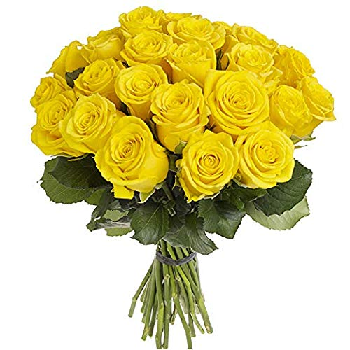 Green Choice Flowers - 24 (2 Dozen) Premium Yellow Fresh Roses with 20 inch Long Stem Farm Fresh Flowers Beautiful Yellow Rose Flower Cut Per Order Direct from Farm Fast Free Delivery Long Lasting