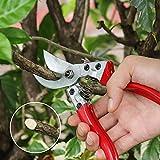 "Best Flower Shears - WYF 8"" Pruning Shears Bypass SK-5 Steel Blade Review"