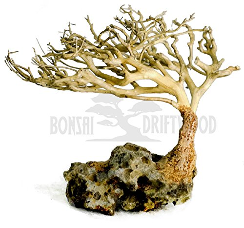Bonsai Driftwood Aquarium Tree (4 Inch Height) Natural, Handcrafted Fish Tank Decoration | Helps Balance Water pH Levels, Stabilizes Environments | Easy to Install