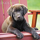 Puppies Wall Calendar (2017)