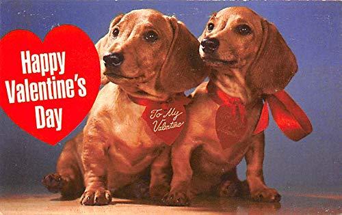 Dachshund Valentines Day Postcard Unused
