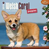 By BrownTrout Welsh Corgi Puppies 2015 Mini 7x7Publications (Multilingual Edition) (Min Wal Mu) [Calendar]