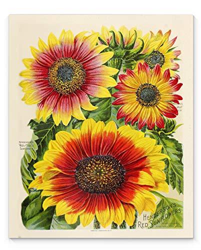 Vintage Floral Sunflower Wall Art, 11