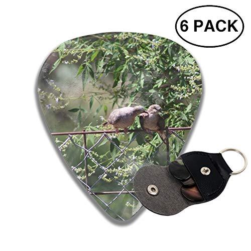 Animal Dove Birds Celluloid Guitar Picks 3D Printed 6-pcs Thin, Medium, Heavy Gauges For Boyfriend