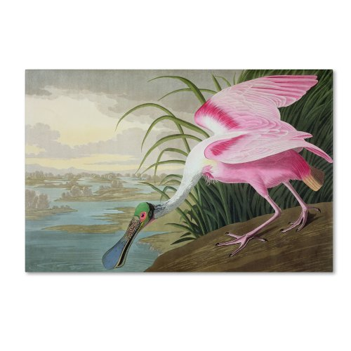 Roseate Spoonbill Artwork by John James Audubon, 22 by 32-Inch Canvas Wall (Audubon Canvas)