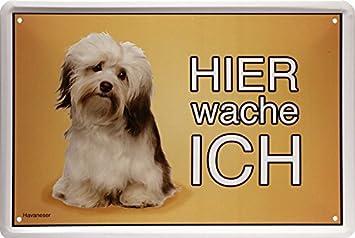 Schatzmix Blechschild Hier Wache Ich Havaneser Hund Dog Amazonde