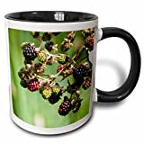 3dRose Danita Delimont - Washington - USA, Washington, Himalayan Blackberries - US48 TDR0965 - Trish Drury - 11oz Two-Tone Black Mug (mug_148683_4)