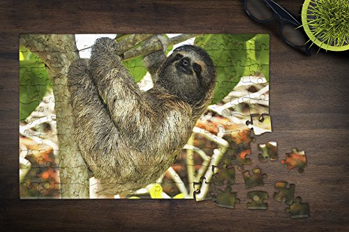 Sloth Photo Jigsaw Puzzles For An Inside Sloth Day Just