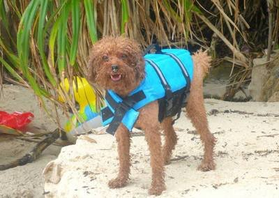 Cat and Dog Accessories M and F 1 PC Small Large Dog Life Jacket Vest Buoyancy Aid for Boating Sailing Swimming Water Size S
